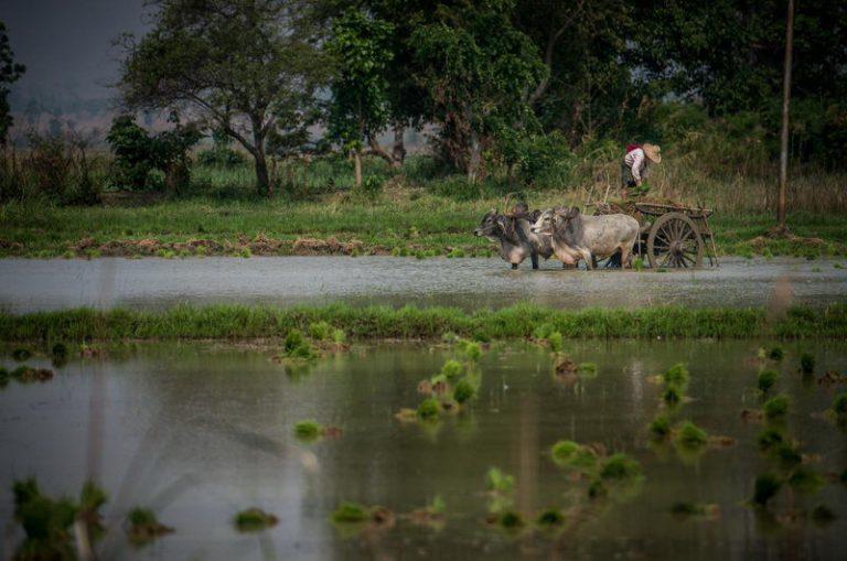 Etniczna-Birma-08