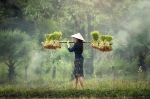 Wietnam-03