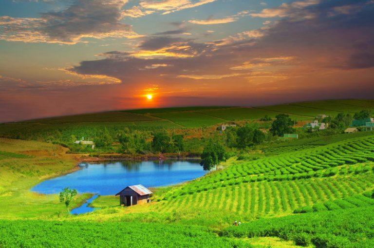 Zielony-Wietnam-07