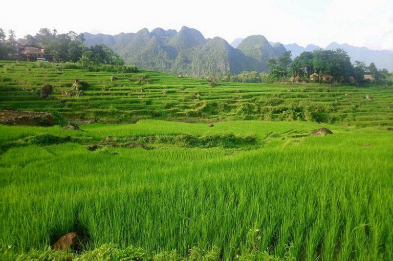 Zielony-Wietnam-09