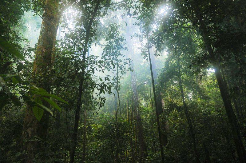 Kinabalu-National-Park-1
