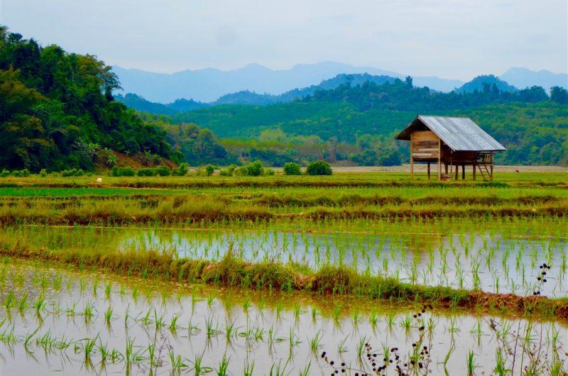 Luang-Namtha-1