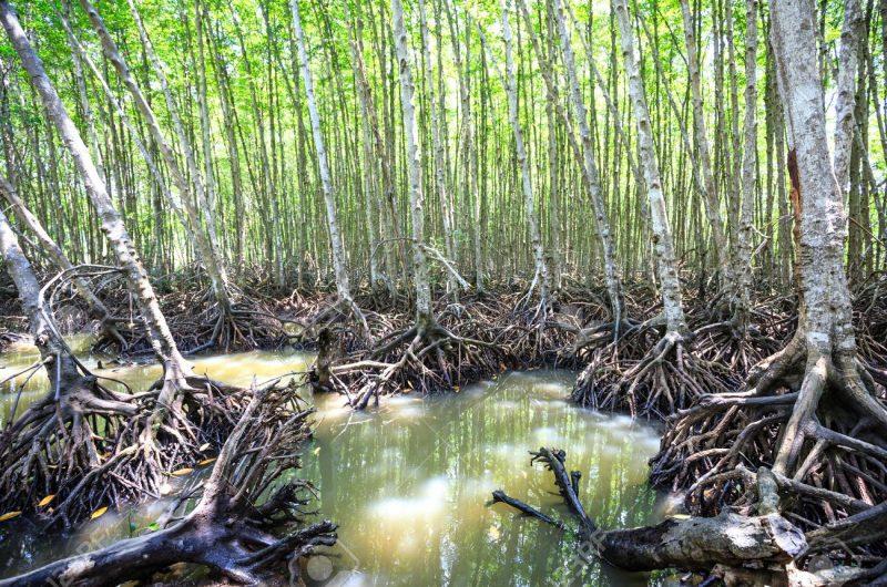 Can Gio Mangrove Wietnam
